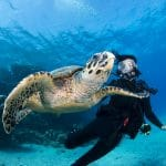 Scuba Diving Staniel Cay