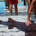 Swim witht the sharks