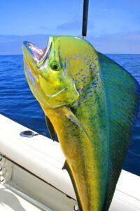 Fishing Staniel Cay Adventures Bahamas