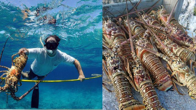 Scuba Diving Staniel Cay DayTour fish2