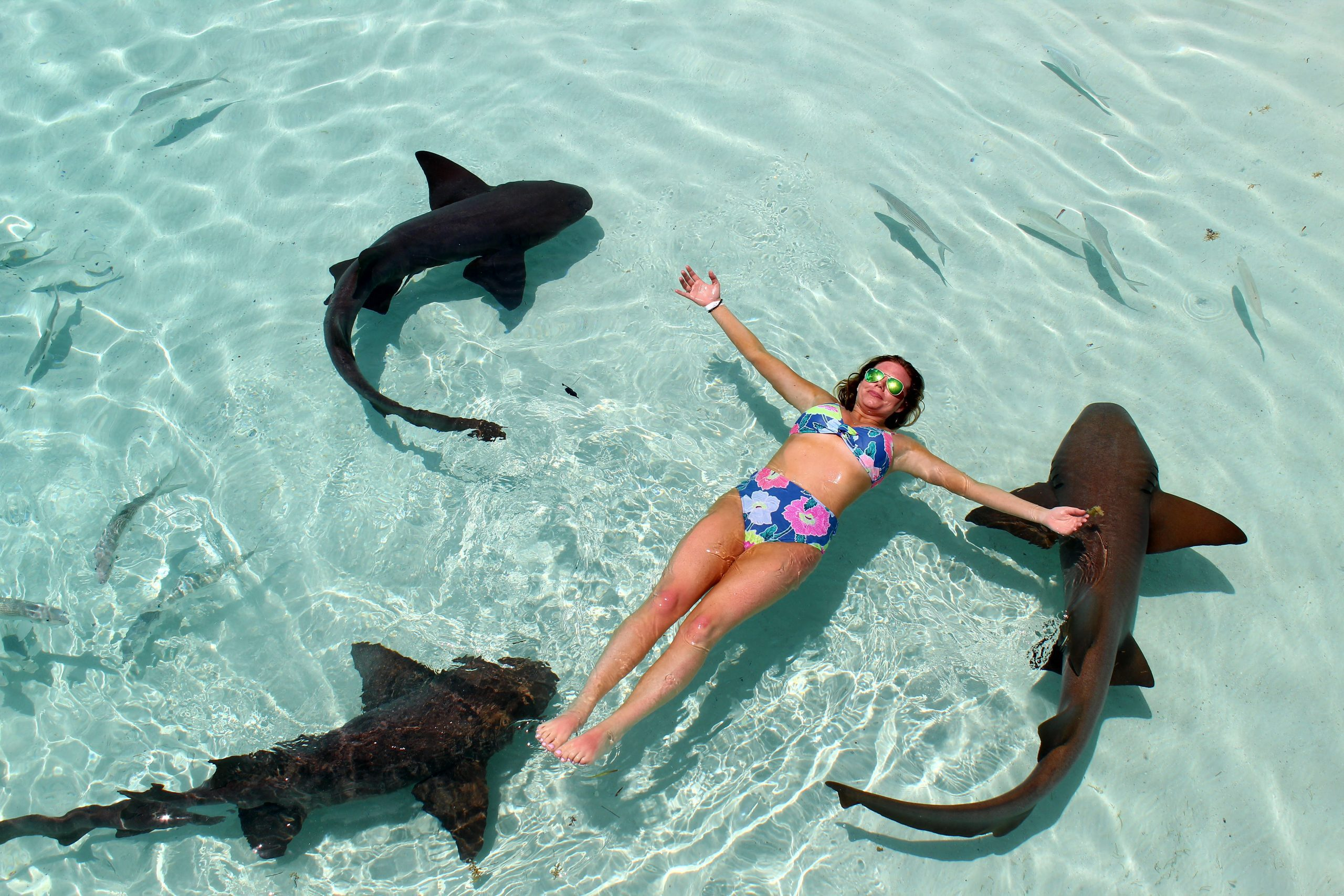 Swimming wth the sharks