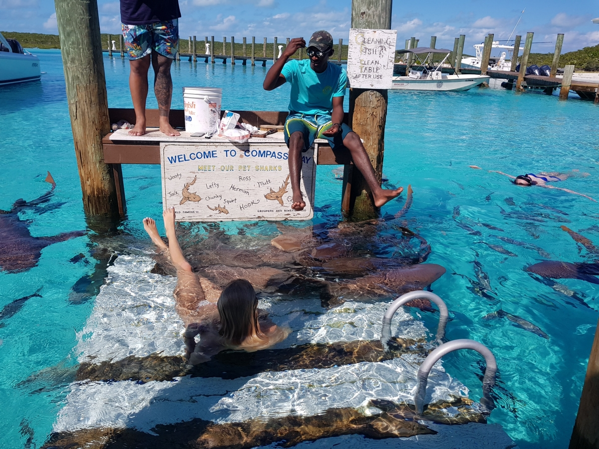 Swimming With The Sharks - Staniel Cay Adventures