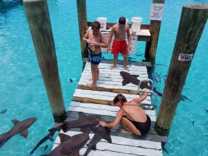 swim with the sharks Compas Cay Exuma Bahamas