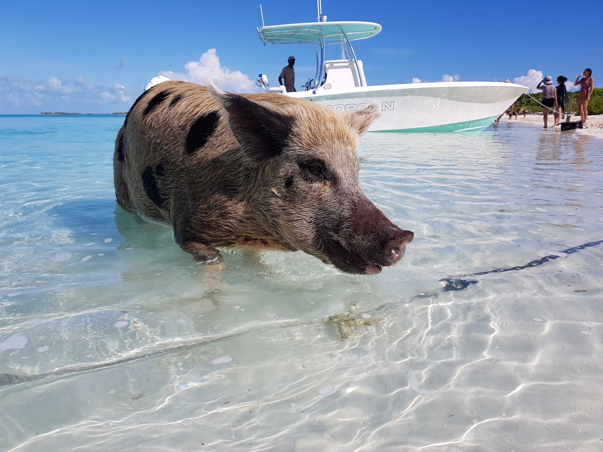 Tour From Great Exuma/Georgetown - Staniel Cay Adventures
