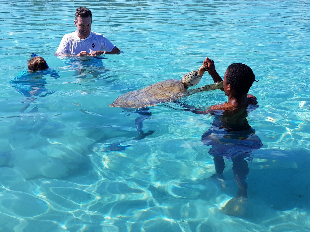 Feed The Turtles: Little Farmer's Cay - Staniel Cay Adventures