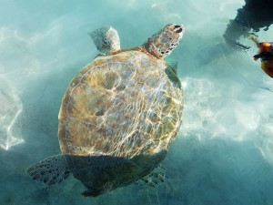 Day tour Feed the turtles Farmers Cay Bahamas