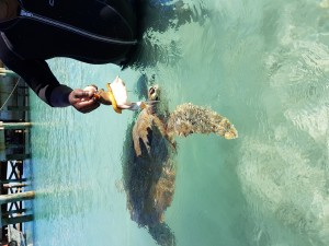 Day Tour From Fort Lauderdale - Staniel Cay Adventures