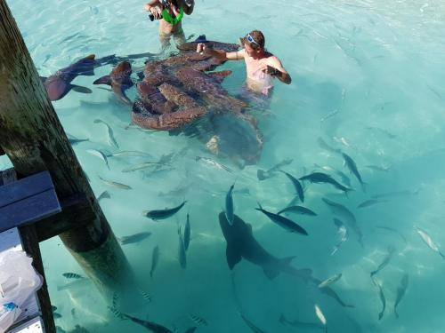 Swim with the sharks Staniel Cay Adventures Bahamas