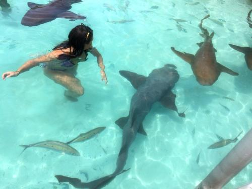 Compass Cay Bahamas Swim with the sharks