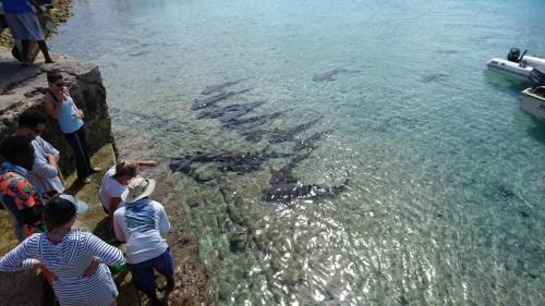 Swim with the sharks Staniel Cay Adventures Bahamas