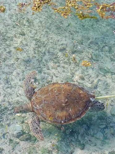Staniel Cay Bahamas