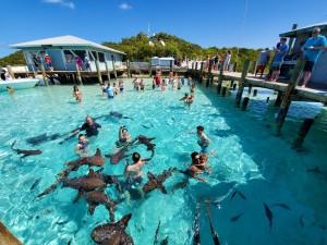 swim with the sharks Compas Cay Exuma Bahamas